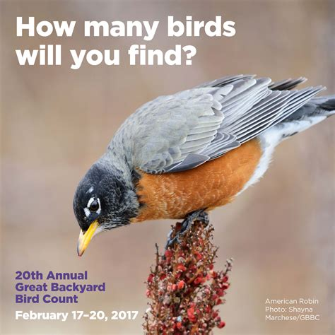 Great Backyard Bird Count The Great Backyard Bird Count 2017 Wyncote Audubon Society