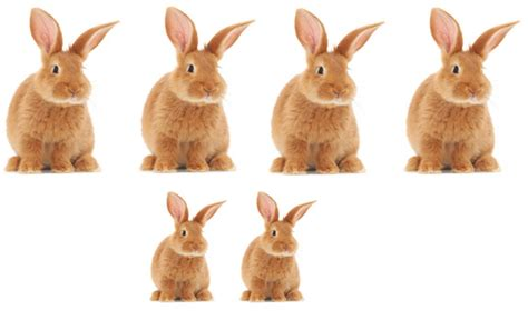 next new year rabbit the fibonacci sequence a brief introduction plus maths org