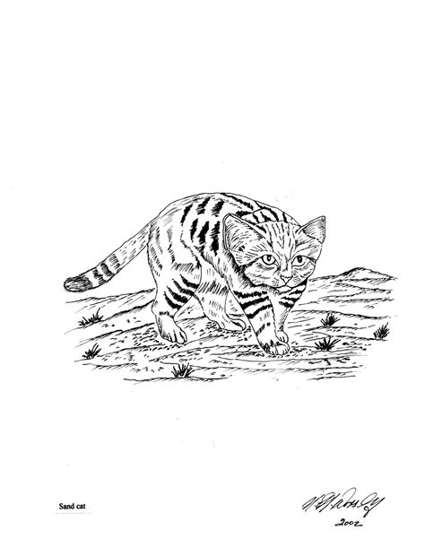 coloring pages of wild cats free coloring pages wild cats freecoloring4u com
