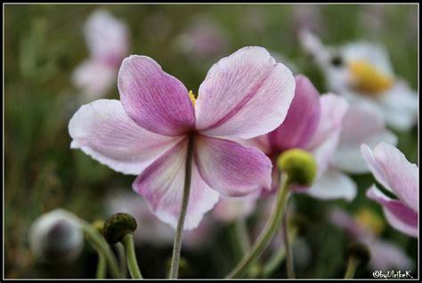 Garten Pflanzen Sommer by Bild Pflanzen Sommer Garten Fotografie Ulrike K