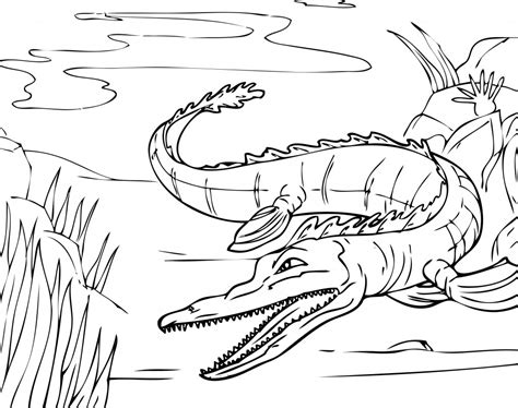 free coloring page of alligator free printable alligator coloring pages for kids