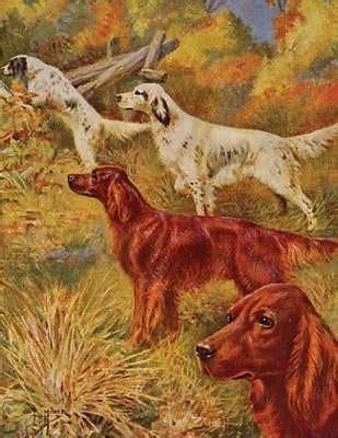 irish setter gun dog irish terrier antique prints pictures and art of irish