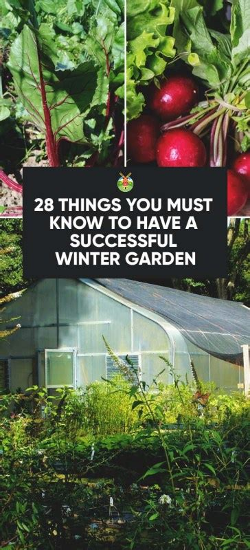things you must have 28 things you must know to have a successful winter garden
