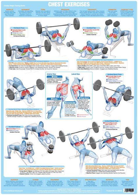 chartex chest muscles weight chart chartex ltd