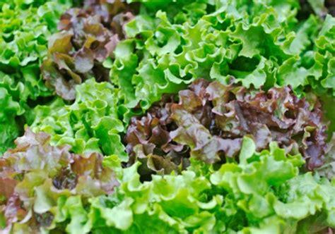 Pflanzen Nach Dem Mond 4988 by Sortiment Mebo Flor G 228 Rtnerei G 228 Rtnerei Bozen