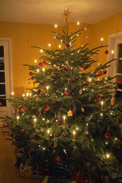 17 best ideas about real christmas tree on pinterest