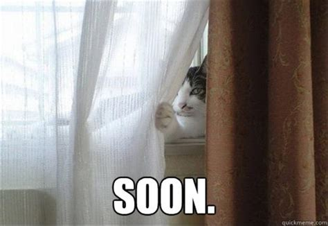 Cat Soon Meme - you ve got karma