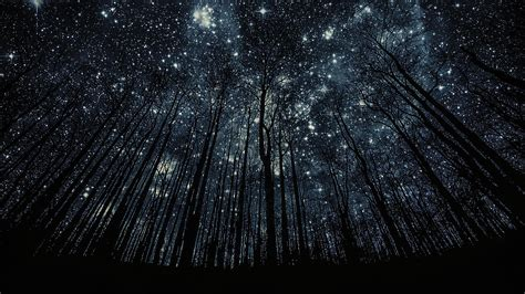 tree silhouette against starry night sky harmonia love embrace grace blog