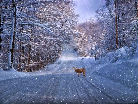 snowy winter morning  kathyweaverphotogirl  deviantart