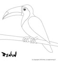 toco toucan colouring pages