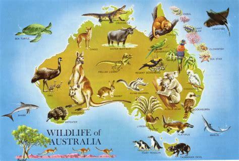 8 Animals From Australia Id To See by Australia Australian Animals Australia And Geography