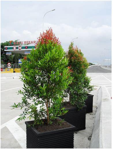 Tanaman Hias Anthurium Merah Lokal beberapa tanaman hias yang dapat menghasilkan uang