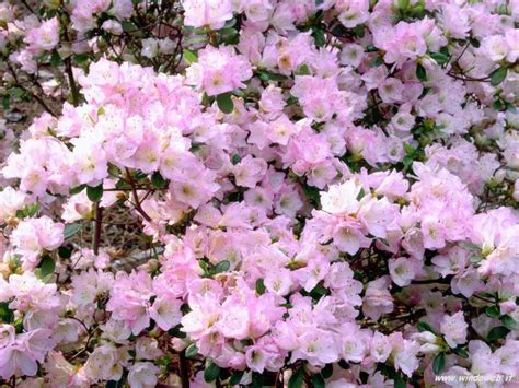 panorama fiori telefono aprile 2008 oltre il cancello pagina 2