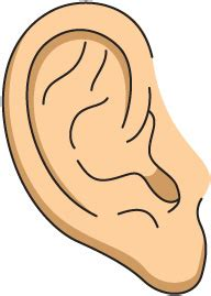 ear clipart best