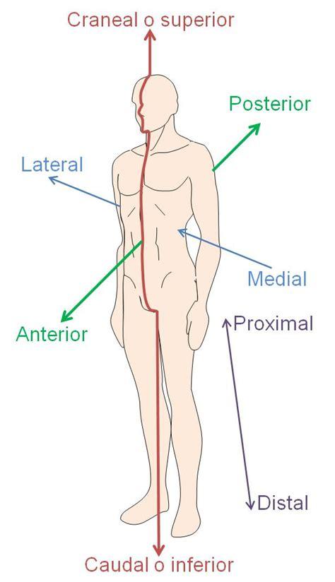 anatoma para posturas de 8415053150 anatom 237 a aplicada