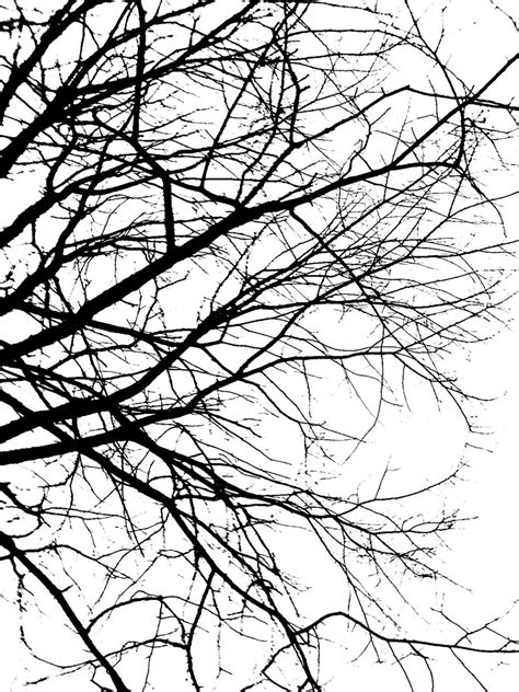 Twig Putih wallpaper trees silhouette branches wallpapersafari