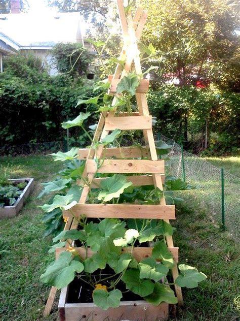Vertical Gardening Zucchini Vertical Zucchini Trellis Gardening