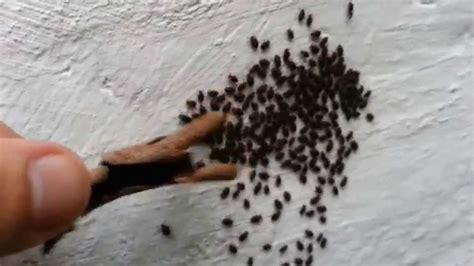 insectos de cama un pu 241 ado de peque 241 os insectos hacen a mi mano lo que un