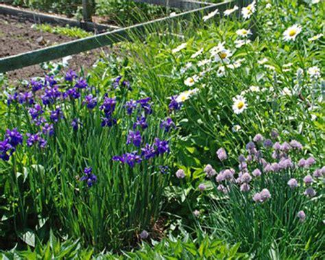 dividing spring and summer blooming perennials whav