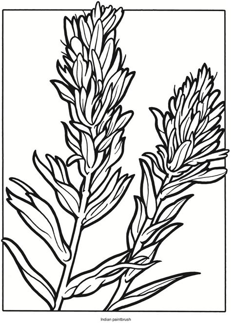 dover publications creative haven wildflowers