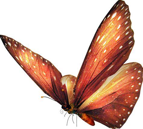imagenes animadas de mariposas mariposas animadas imagenes de mariposas sin fondo