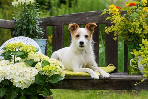 backyard breeders aspca safe plants for dogs learning from dogs