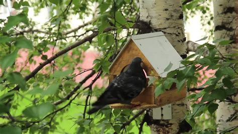 Bird Feeder Trough Birds Feeding Trough Attached To A Birch Forest Park Stock