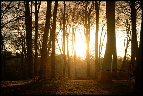 woods sunset wallpaper warley woods sunrise to sunset in spring the bearwood blog