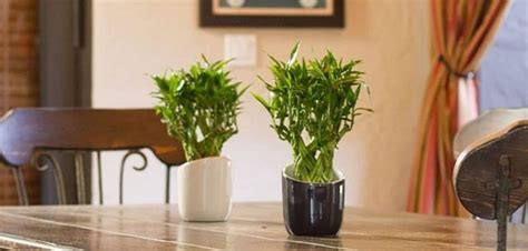 essential indoor gardening tips