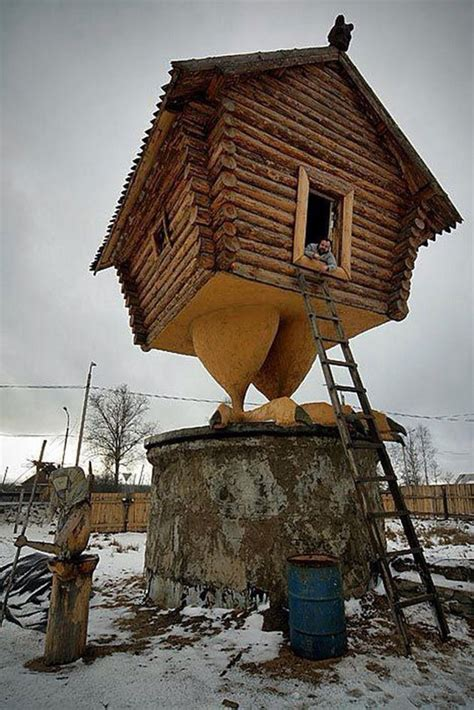 chicken home dailypicdump