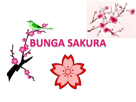 wallpaper bunga sakura untuk hp bunga sakura