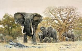 elephant calf johan hoekstra wildlife collection