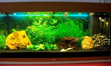 mod 232 le d 233 coration interieur d aquarium