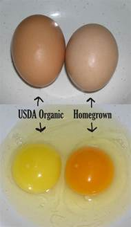 are store bought organic eggs the real deal organic
