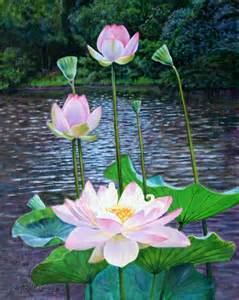 Lotus Painting Lotus Painting By Lautermilch