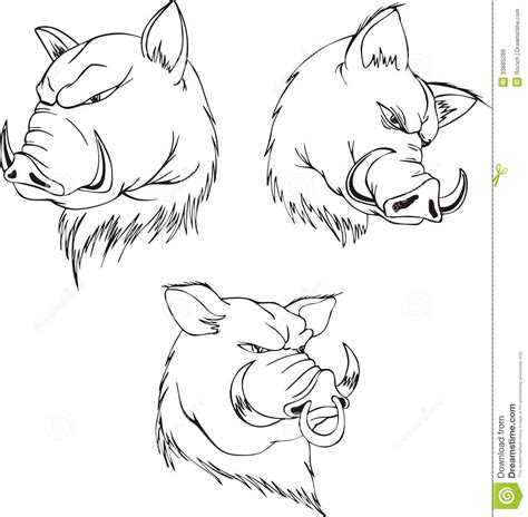 hog tattoo design aggressive boar heads royalty free stock images image