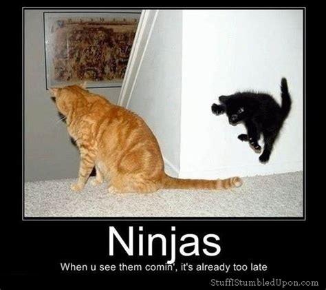 Ninja Memes - ninja cat meme