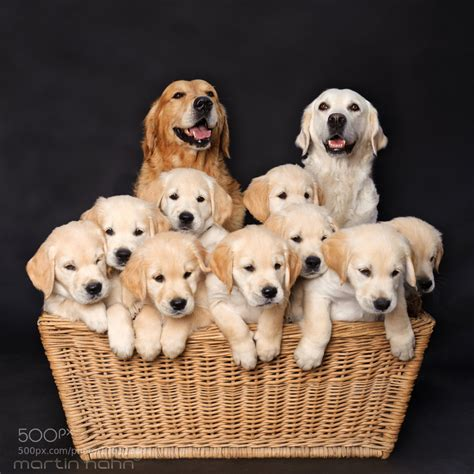 family puppy family by martin hahn