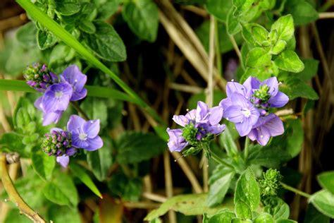 Imagenes Flores Salvajes | flores salvajes fotos de plantas y flores