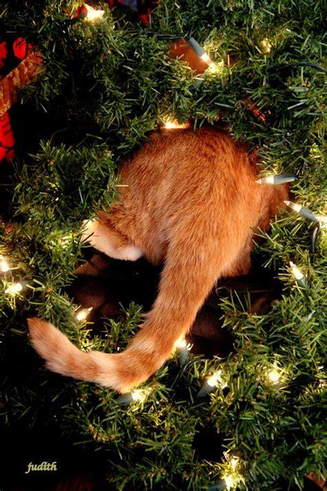 simons cat weihnachtsbaum best 25 cats ideas on