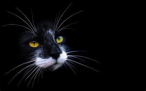 desktop wallpaper black cats cat desktop wallpaper