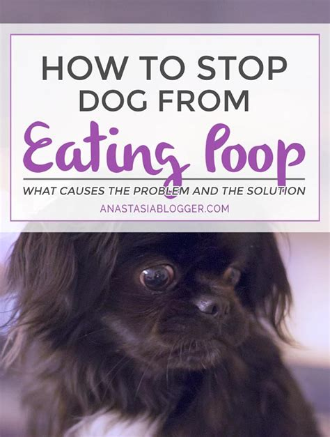 how to prevent dogs from pooping in the house how to stop dog from eating poop why do dogs eat poop