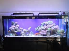 fish aquarium lights led lighting 10 images of exles aquarium led lighting