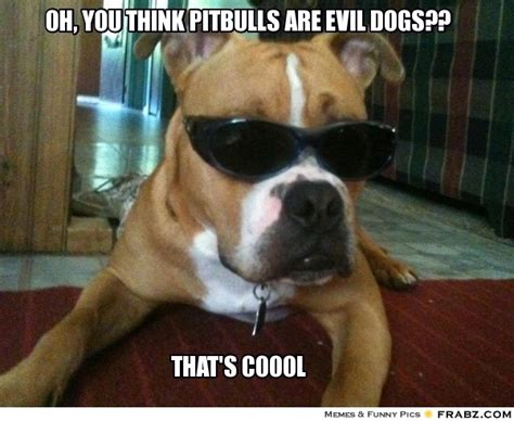 Pitbull Puppy Meme - oh you think pitbulls are evil dogs meme generator
