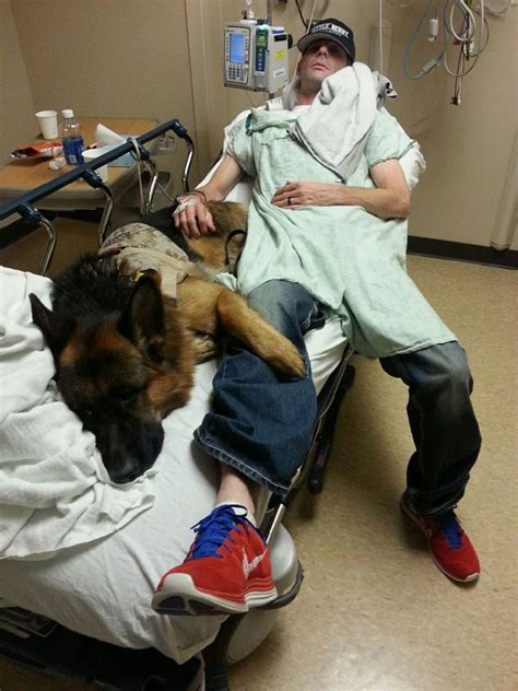 ptsd therapy dogs battle buddy canine friend helps veteran cope with ptsd
