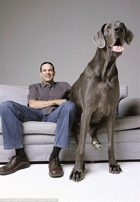 mujer penetrada por perro mas grande del mundo ver videos el perro m 225 s grande del mundo fotos de george el