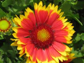 pretty flower makes my day