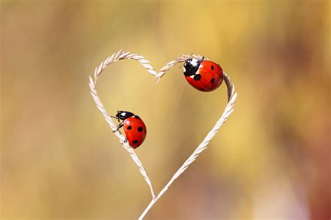 images of love nature nature love by lisans on deviantart