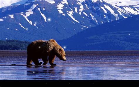 imagenes de paisajes montañosos brown bear live wallpaper android apps on google play