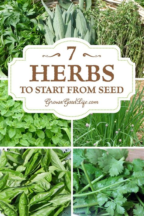 how to grow herbs best 25 herbs garden ideas on pinterest herb garden